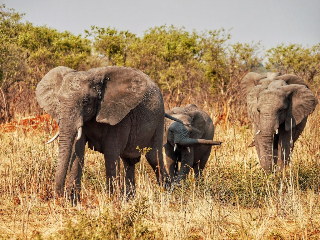 Game Drive Chobe National Park