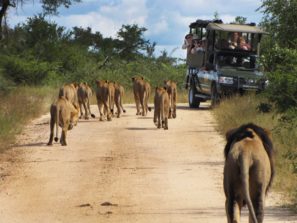 Game Drive Kurger National Park